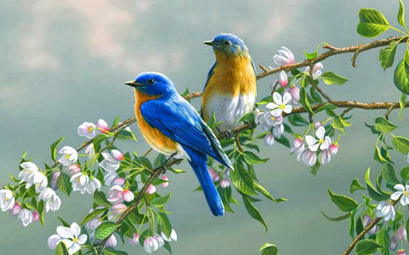 دانلود افکت پرندگان | دانلود صدای پرندگان