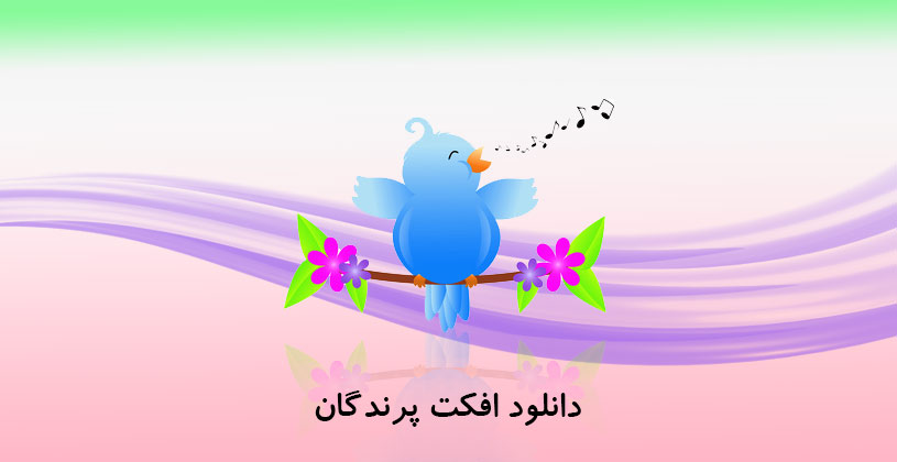 Photo of دانلود افکت پرندگان Birds Singing Sound Effects Library